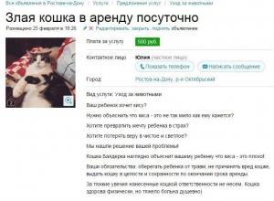 Злую кошку сдают в аренду в Ростове: животное превращает мечту детей в страх