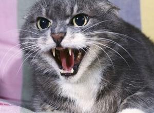 Домашний кот искусал девочку в Ростовской области и умер