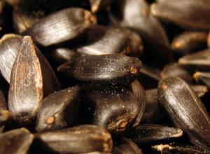 Зараженные опасной пыльцой семечки подсолнечника обнаружили в Ростовской области