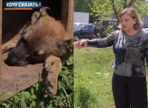 Трупами погибших от крысиного яда щенков препятствуют размножению собак в Ростове, - Людмила Баранова