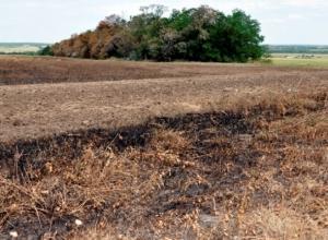 В Ростовской области из-за стрельбы на Украине загорелось поле вблизи МАПП Волошино