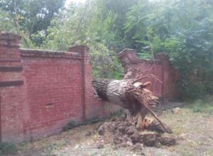 Рухнувшее дерево-гигант проломило толстую кирпичную стену в Ростове