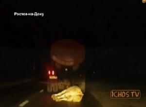 В Ростове очевидцы сняли на видео, как водитель цистерны проволок корову по дороге