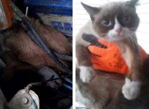 Знаменитого Угрюмого кота обнаружили в машине «скорой» Ростова