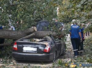 В Ростовской области по факту гибели мужчины из-за падения дерева возбуждено дело