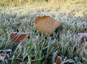 В Ростовской области прогнозируют заморозки до -3 градусов