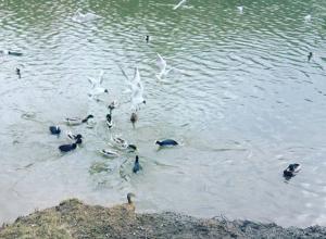Хорошо организованная птичья банда наводит ужас на обитателей парка в Ростове