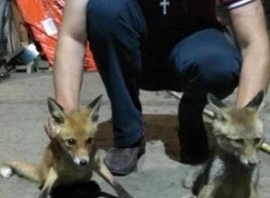 Ожидающих голодную смерть в глубокой яме двух пушистых лисичек спасли смелые парни из Ростова