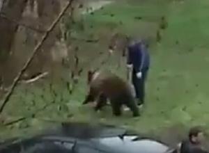 Удивительную прогулку медведя на поводке сняли на видео в Ростовской области