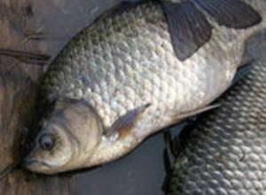 Перевозчиков опасной рыбы без документов поймали на границе в Ростовской области