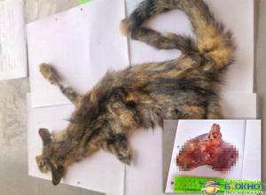 В Ростове-на-Дону осудят живодера, расчленившего кошку