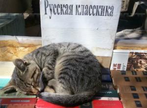 Разогнать книжный развал на Пушкинской собираются ростовские власти