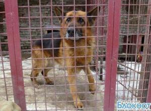 Полиция подтвердила возбуждение дела против директора ростовского центра безнадзорных животных