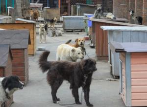 Жестокое отношение жителей Ростова к «домашним питомцам» возмутило Кушнарева