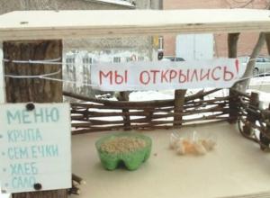 Оборудованный со вкусом ресторан для птиц вызвал голодный интерес у жителей Ростова