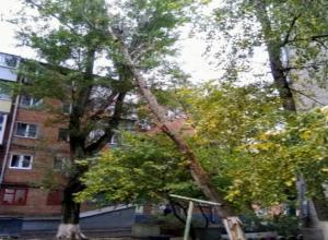 Штормовой ветер опасно накренил огромное старое дерево над жилым двором в Ростове