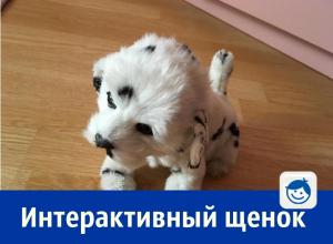Почти живого интерактивного щенка могут приобрести жители Ростова