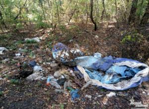 Утопающая в зловонном мусоре роща довела ростовчан до исступления