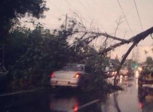 В Ростове на проспекте Шолохова на проезжающий автомобиль упало дерево