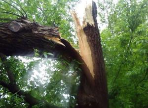Сломанное ветром гигантское дерево у школы в Ростове попало на видео