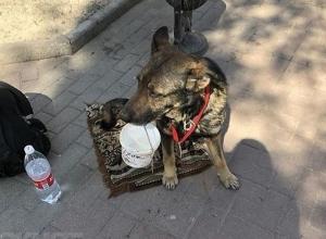 Жертвовать по 100-500 рублей собаке-попрошайке призвал прохожих ее обнаглевший хозяин в Ростове