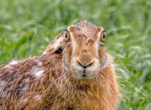 Гонять зайцев и помогать им размножаться будут в Ростовской области
