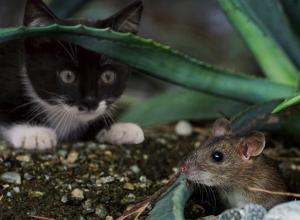 Чиновники поймают мышей на ростовском кладбище за 700 тысяч рублей