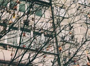 «Мерзкое» чайное дерево под окнами многоэтажки возмутило жителей Ростова