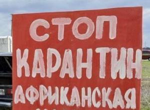 В Ростовской области введен режим ЧС из-за африканской чумы