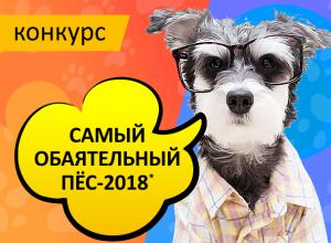 Началось голосование в конкурсе «Самый обаятельный пёс-2018»