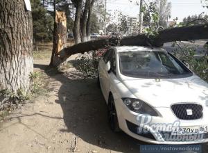 Две припаркованные иномарки получили мощный удар от рухнувшего на них дерева