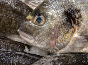 Вяленой рыбкой, несущей инфекцию и отравления, торговали ростовские «Ашаны» и «Магниты»