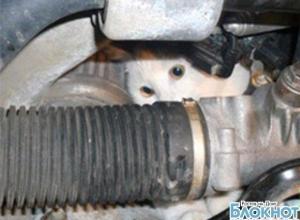 В Батайске в автомастерской спасли кота, застрявшего под капотом «Нивы»
