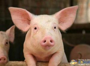 В Ростовской области в продукции мясокомбината нашли вирус АЧС