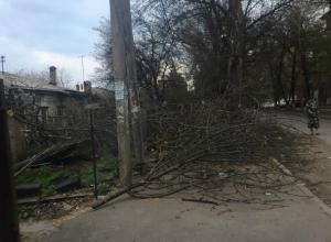 Коммунальщики превратили тротуары Ростова в «непроходимые джунгли»