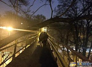 В Ростове над переходным мостом на проспекте Стачки на проводах повисло дерево