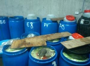 В Ростовской области накрыли подпольный цех, где готовили корейскую еду в антисанитарных условиях