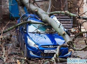 В Ростове упавшее дерево раздавило припаркованный возле гаража «Хендай»
