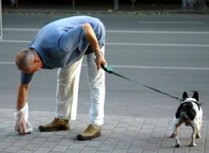 Экскременты собак Ростова заинтересовали местных и федеральных чиновников
