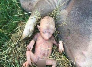 Жуткое чудовище с человеческим тельцем родила обычная свинья в Ростовской области