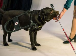 Благотворительный зоофестиваль «Доброе сердце» в честь всемирного дня собаки-поводыря проведут в Ростове