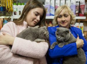 Умилительные знакомства победителей конкурса «Самый красивый кот-2017» попали на видео