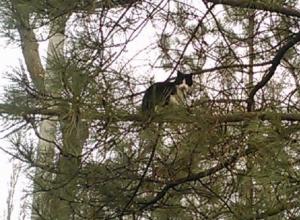 «Вьющие гнезда» в удивительных местах Ростовской области мартовские коты попали на фото