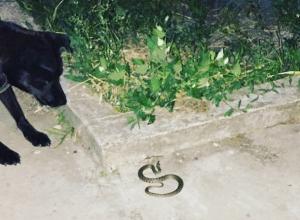 Появившийся «не в том месте» загадочный змей напугал жильцов многоэтажки Ростова