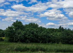 Ростов оказался в числе городов, которые наплевательски относятся к природе