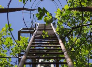 «Палочная система»: магония и боярышник в День древонасаждения не спасут экологию Ростовской области