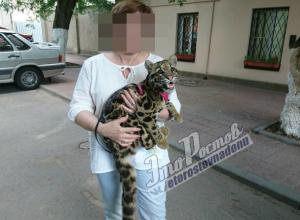 «Гламурная» прогулка опасного «клыкастого» зверя по улицам Ростова возмутила горожан