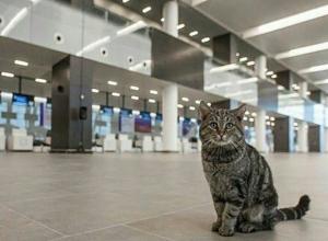 Ростовский аэропорт «Платов» назвал самые популярные авиарейсы