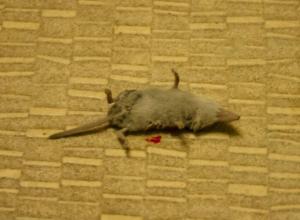 Из квартиры на девятом этаже жильцы сбежали из-за атаки мышей в Ростове