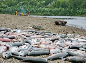 Браконьеры выловили из Таганрогского залива 7 тыс. рыб разных пород